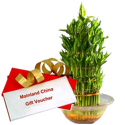 Exclusive Combo of Mainland China Gift Voucher worth Rs.1000 and Lucky Bamboo Plant in Bowl