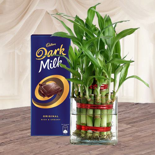 Gift of Lucky Bamboo Plant n Cadbury Chocolate