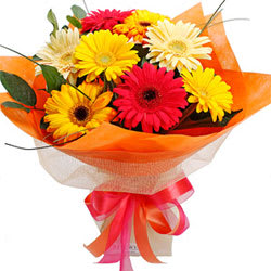 Wonderful Gerberas Bunch