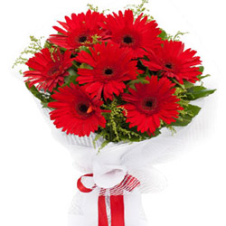 Stunning Red Gerberas Bouquet