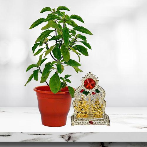 Aesthetic Holy Tulsi Plant with Ganesh Laxmi Mandap